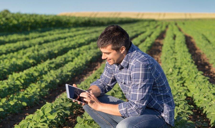 Plataforma digital melhora desempenho de cooperativas e reduz custo de insumos para produtores