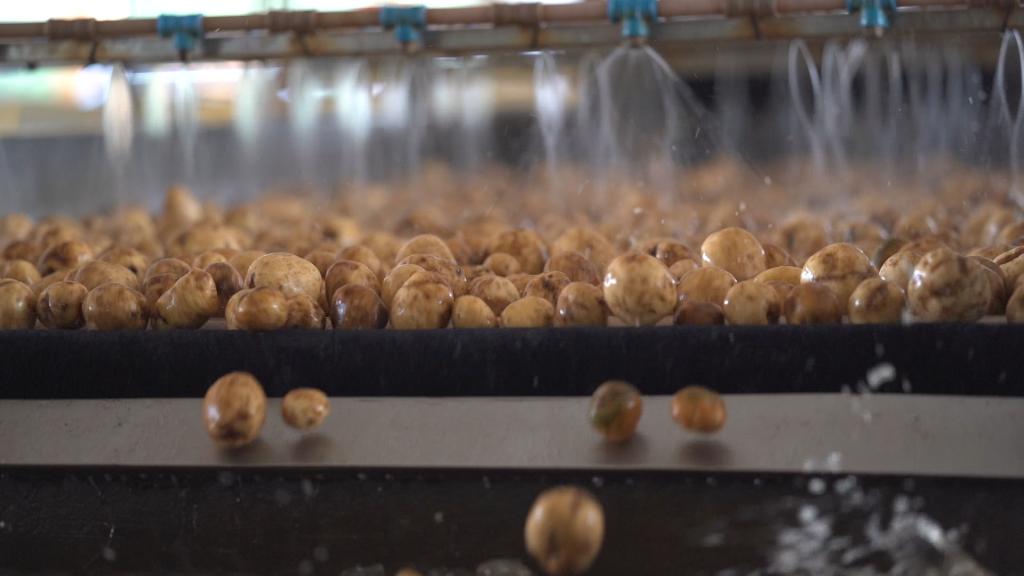 Lavador de Batatas da Castrolanda é o primeiro do país a ser certificado com ISO 9001:2015