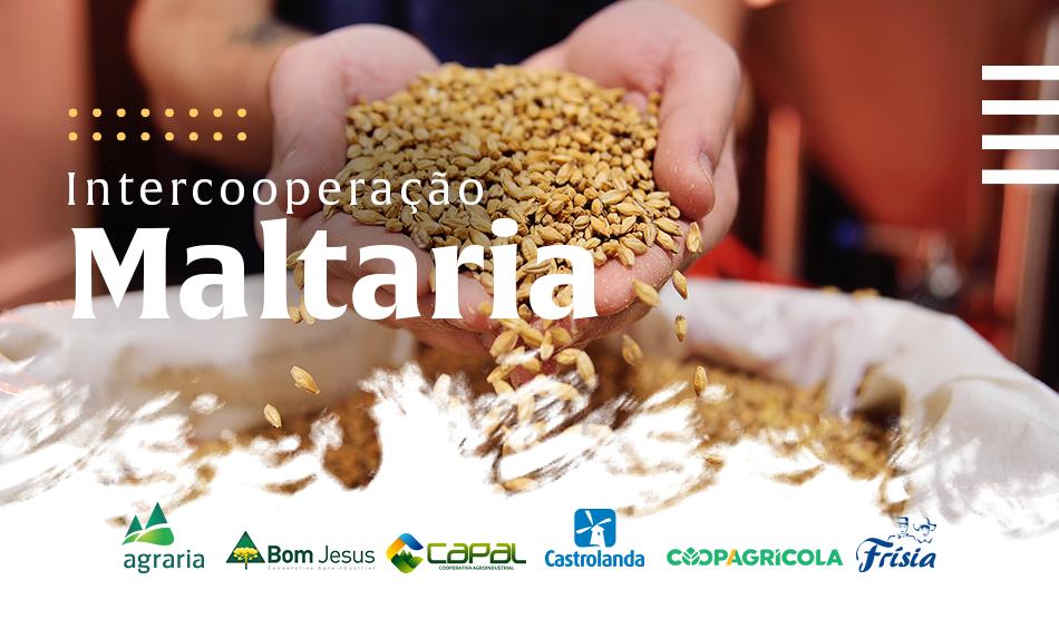 Castrolanda integra projeto  de maltaria nos Campos Gerais