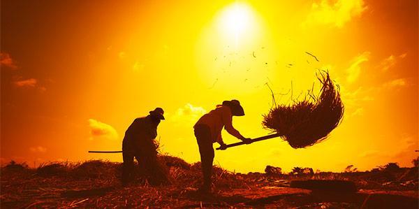 Agropecuária tem maior geração de emprego no 1º trimestre desde 2007