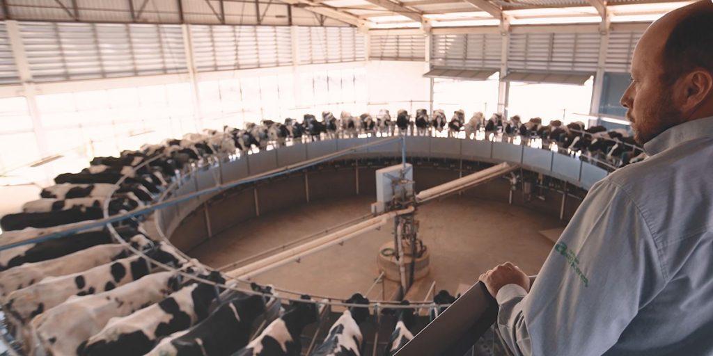 Dia Mundial do Leite: Castrolanda destaca benefícios para a cadeia leiteira