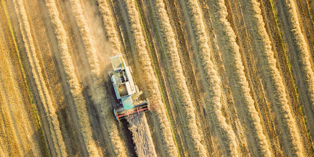 Castrolanda está entre as 100 maiores do agronegócio brasileiro