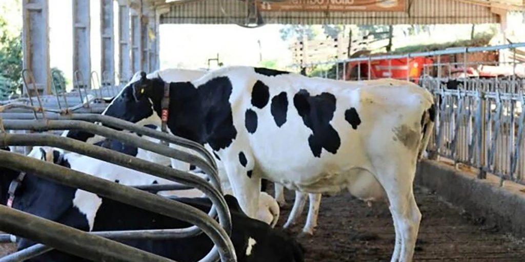 Programa promete setor de leite mais competitivo