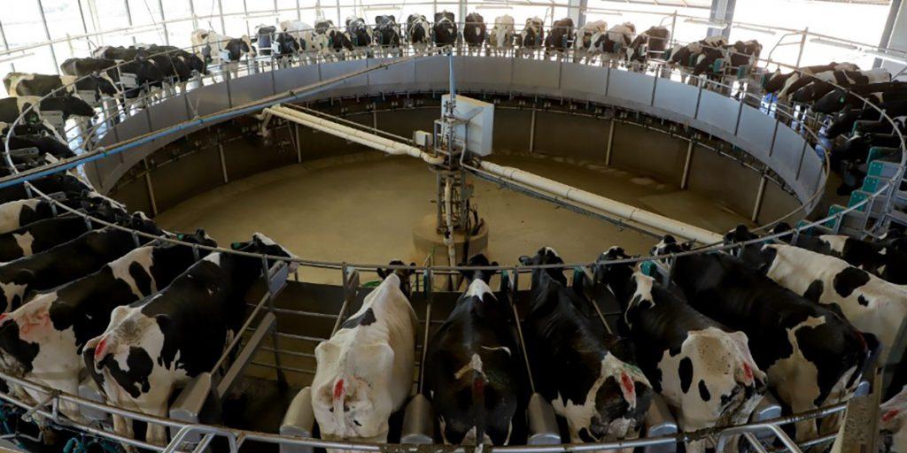 Com tecnologia e eficiência, Castro é referência nacional na produção de leite
