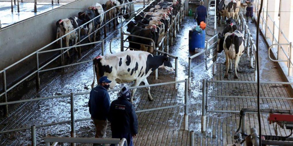 Município do Paraná é o maior produtor de leite do país pelo terceiro ano seguido